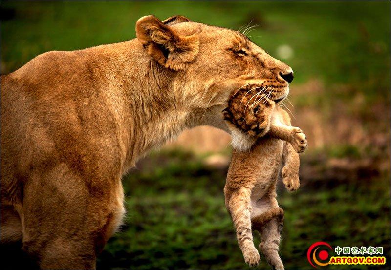 野生动物摄影作品欣赏(转载)
