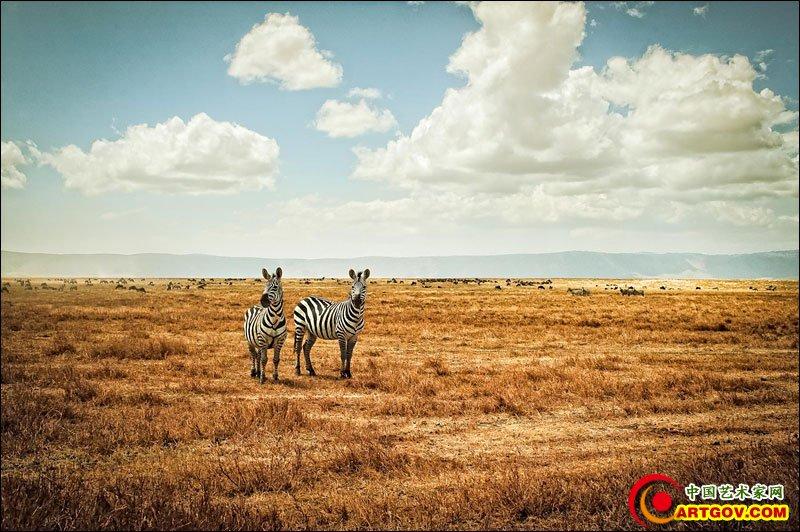 野生动物摄影作品欣赏